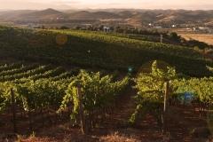 Mata-mouros-vinhas